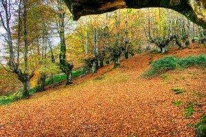 alfombra-de-hojas